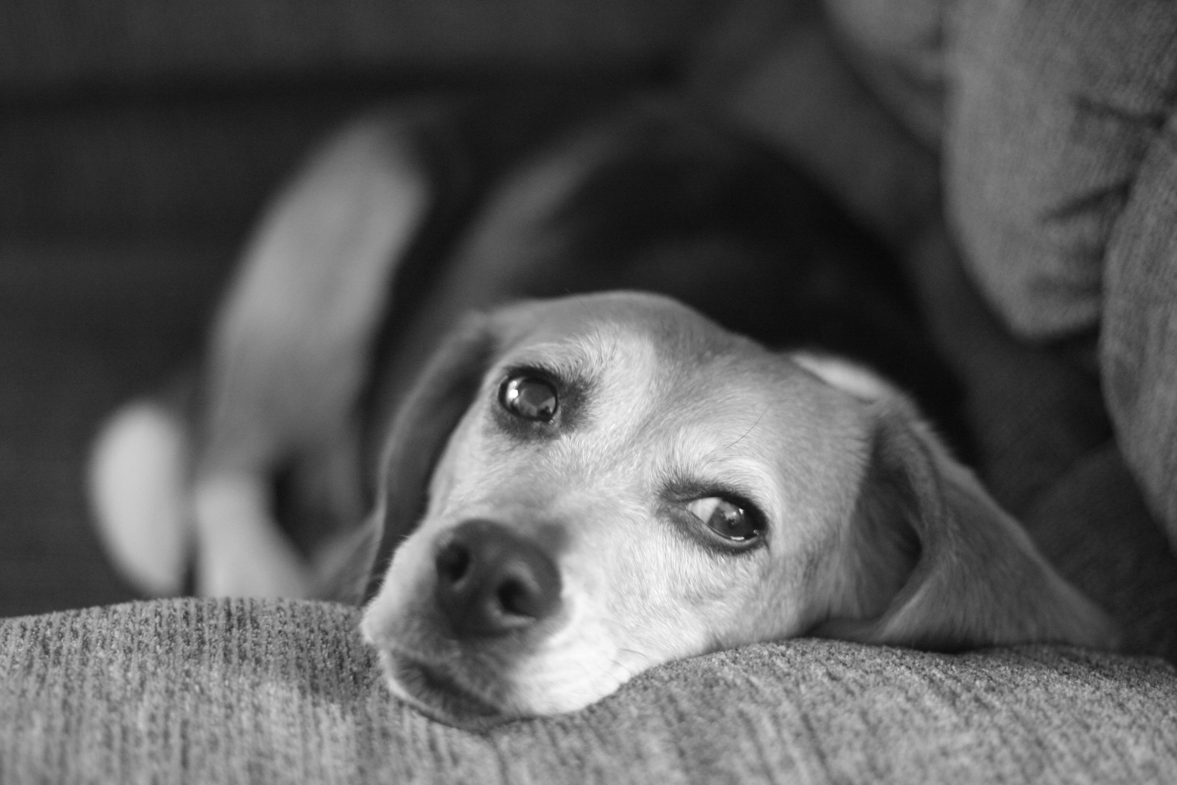 Dogs See In Color, Not Black And White; What This Means ...