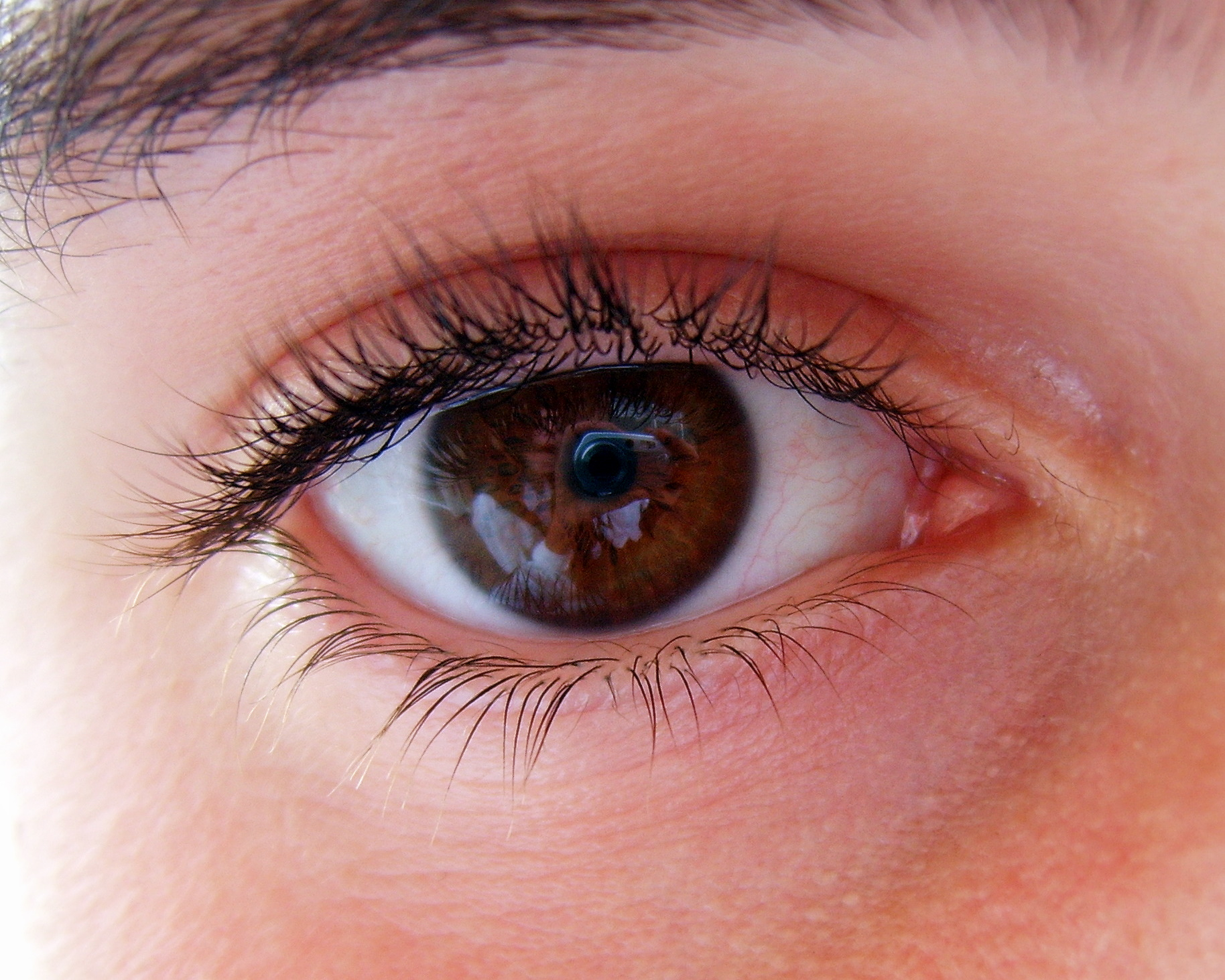 Eye color  Wikipedia