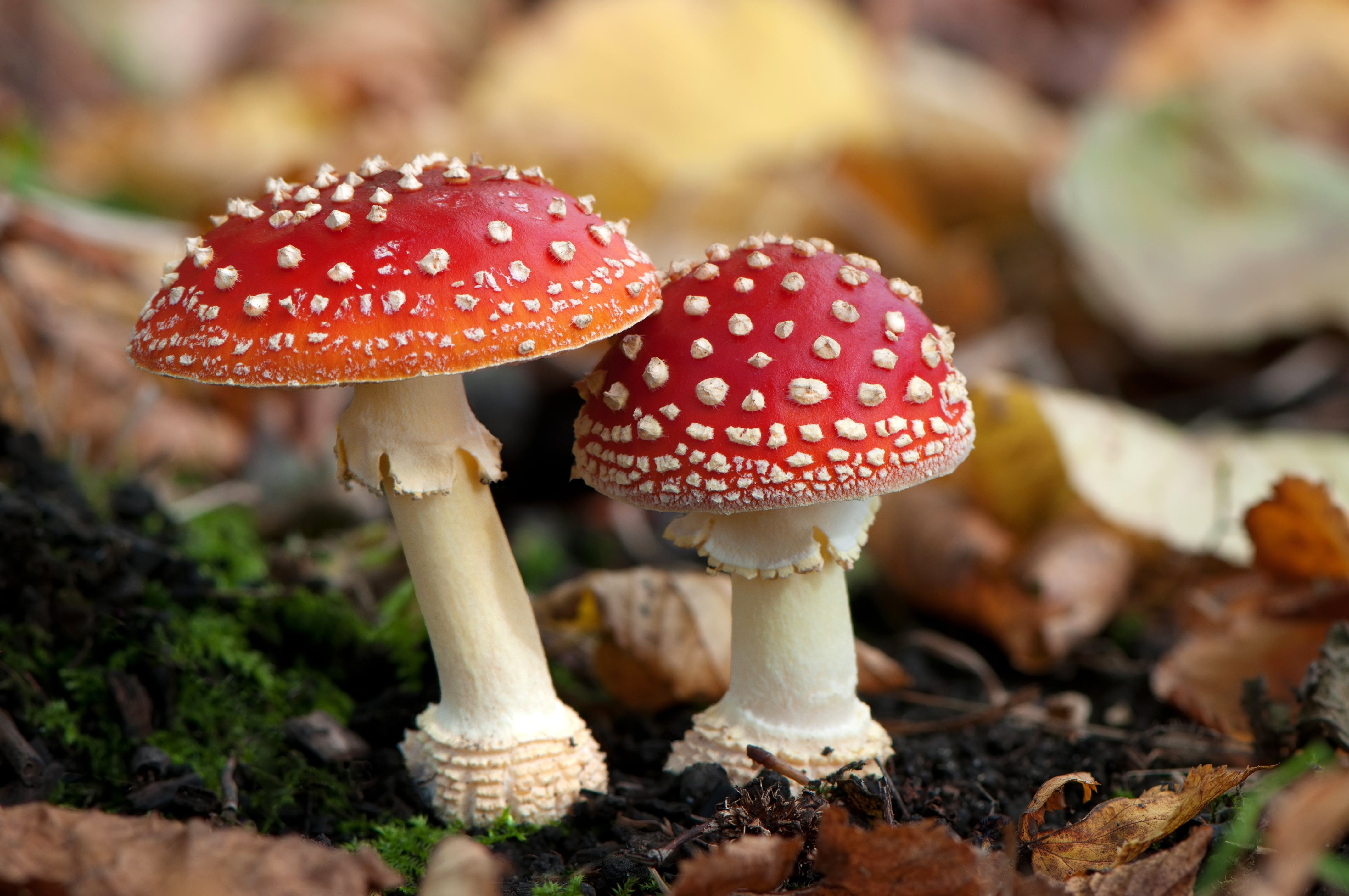 Are Magic Mushrooms Th...