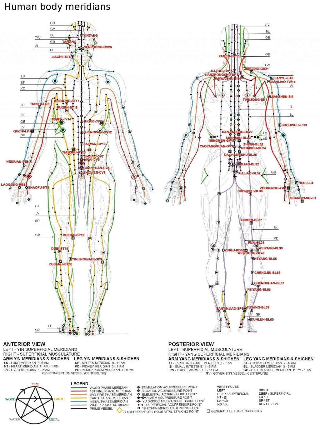 The truth about pressure points which ones can kill you and which chinese meridians solutioingenieria Images