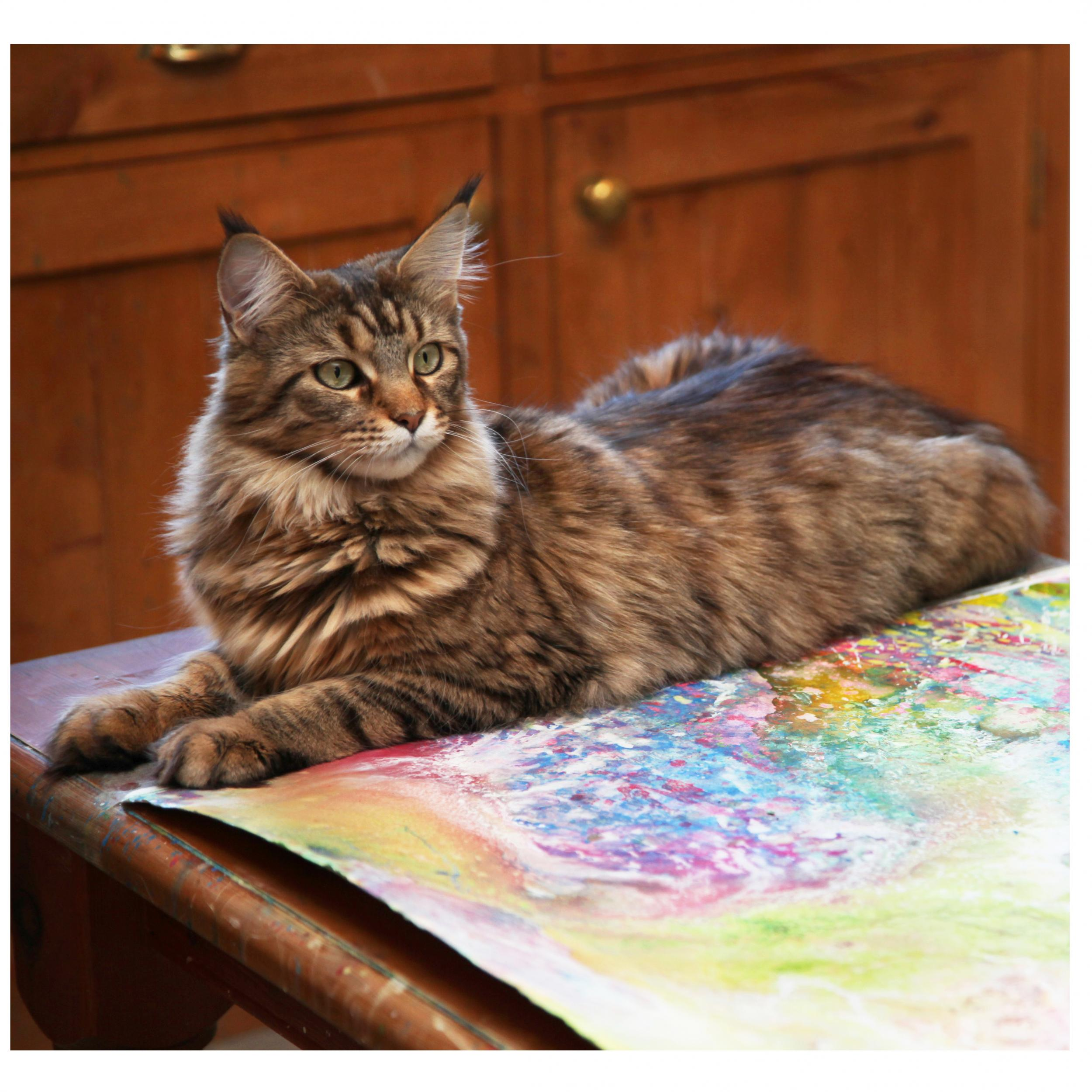 Thula lying on the painting table