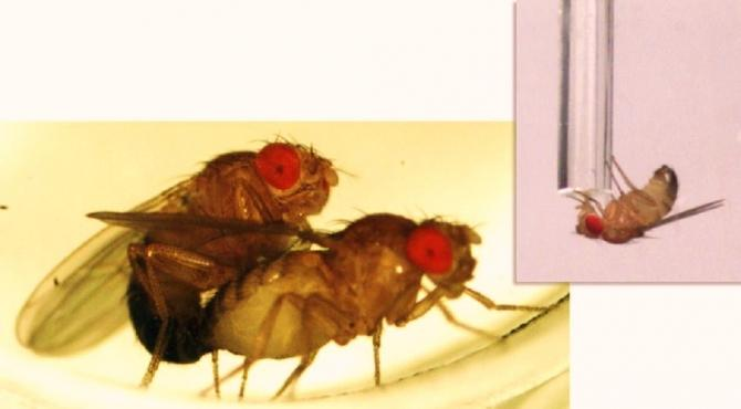 Sexually rejected male flies cope with alcohol.