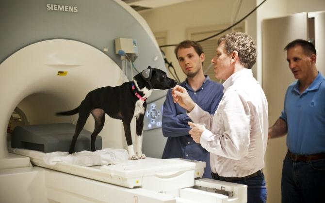 Brain scan shows dog secrets
