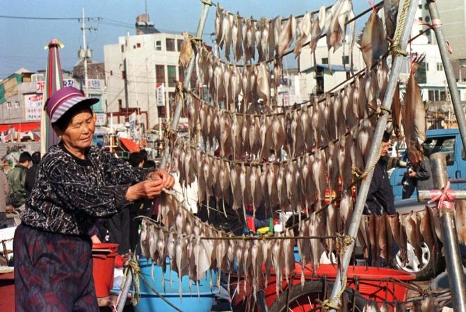 A South Korean woman arranges squid on a rack to dry in the east coast port of Chumunjin December 24. Dried squid is a delicacy in Asia and fishermen and women toil year round in Korea to feed the seafood-loving nation