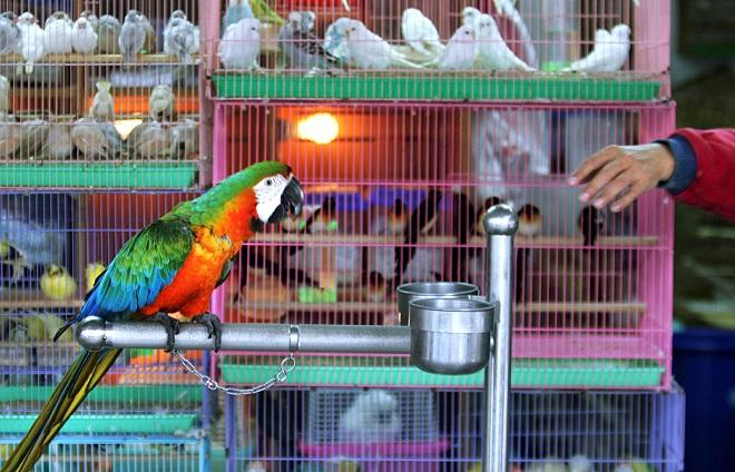Various birds are displayed on a famous bird street, Ho-pin Road, in Taipei. Taiwan has so far been spared a serious outbreak of the H5N1 virus lethal to humans, but authorities found rare birds infected with the strain in a container smuggled from China