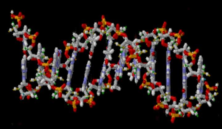 In general terms, why does a mutation in DNA lead to a disease?