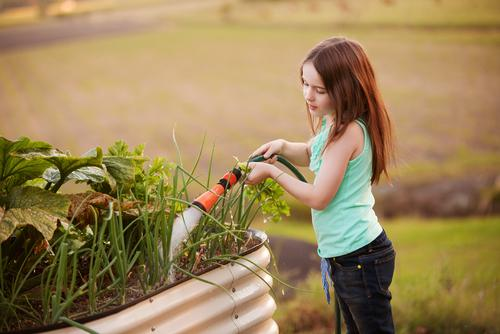 Little girl watering vegetable garden with hose