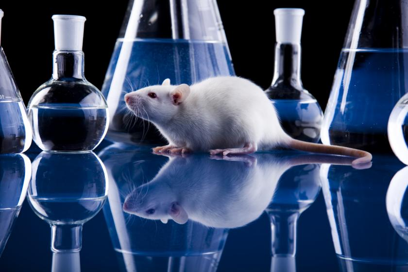 New Technology May Obviate Need For Animal Testing