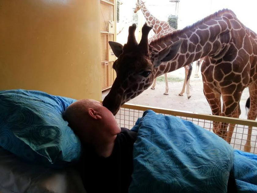 Giraffe kisses dying zookeeper with cancer to fulfill dying wish