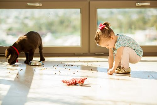 Puppy making a mess with his food while a little girl helps him pick it up