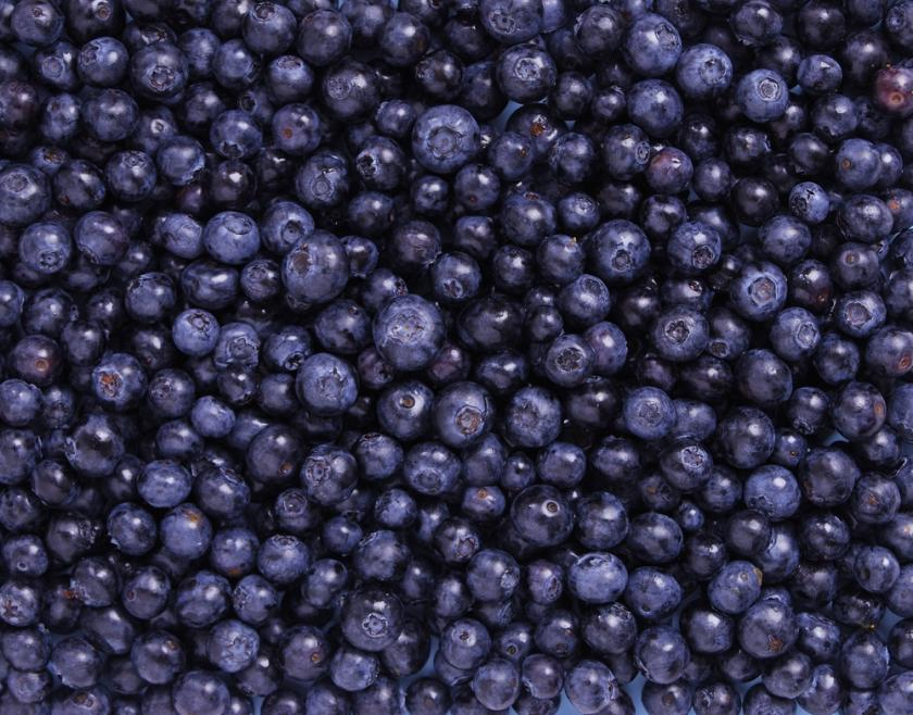 Researchers Develop Blueberry Powder To Effectively Study Its Benefits