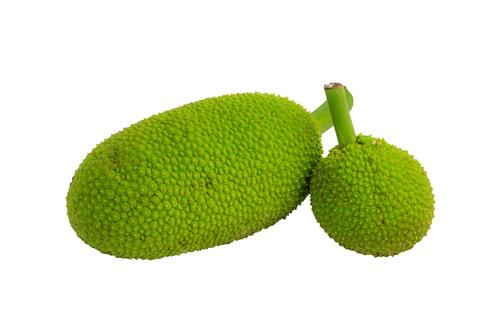 Two breadfruit in on white background