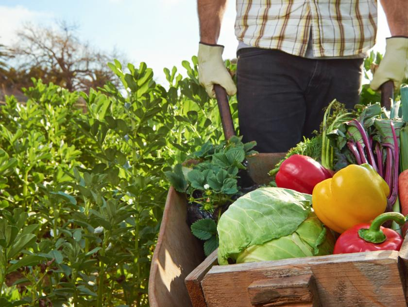 Organic Farming Yields Higher Antioxidant Crops