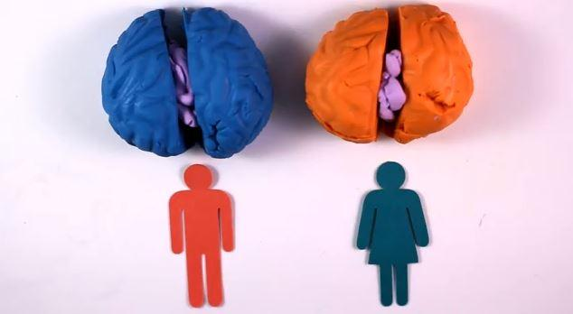 Brain Differences Between The Genders Explained