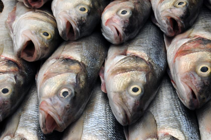 Mercury is still in fish but the fatty acids in seafood for Mercury fish pregnancy