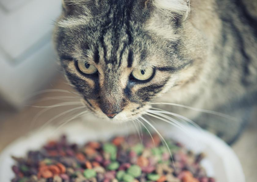 Toxoplasma Gondii, Parasite In Cat Feces, Linked To Schizophrenia And Other Mental Illness