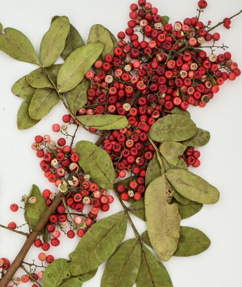 brazilian_peppertree_emory
