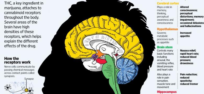 The Side Effects Of Marijuana In The Brain: Some Regions Become More ...