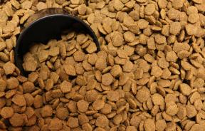 Dry Dog Food, Possibly Contaminated with Salmonella Bacteria