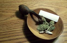 Marijuana's Psychoactive Ingredient, THC, Protects Brain Before And After Injury