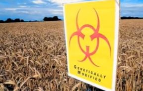 Monsanto Suspects Sabotage In Oregon Field