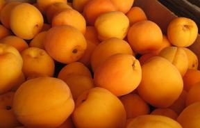 Apricot Nutrition: 3 Surprising Health Benefits of Apricots