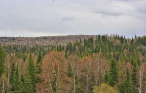 Taiga_in_Zalesovskiy_raion_of_Altai_region_01
