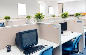Plants in an office environment