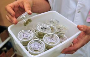 Medical Marijuana Opponents Put On Defensive