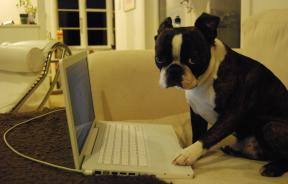 dog tweeting