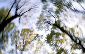 forest-1366345_1920
